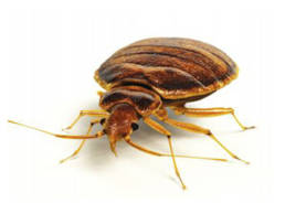 Colorado Pest Pros - Bed Bug Removal 2