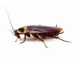 Colorado Pest Pros - Cockroach Extermination
