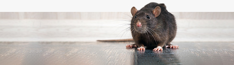 Colorado Pest Pros - Commercial Pest Control