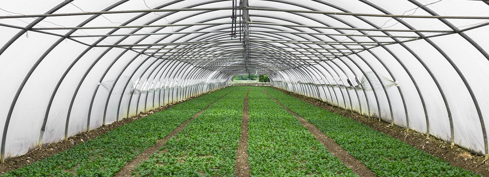 CColorado Pest Pros - Dispensaries & Greenhouses