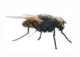 Colorado Pest Pros - Fly Control
