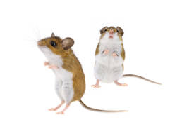 Colorado Pest Pros - Pest Plans Services - 1