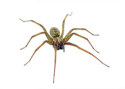 Colorado Pest Pros - Spider Control
