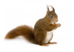 Colorado Pest Pros - Squirrel Removal
