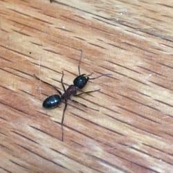 Colorado Pest Pros - Gallery - 1