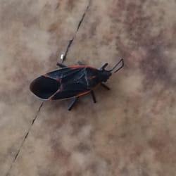 Colorado Pest Pros - Gallery - 1