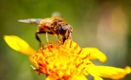 Colorado Pest Pros - Wasps vs. Bees- Know the Difference