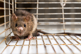 Colorado Pest Pros - 10 Items in Your Home that Mice and Rats Love