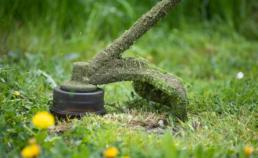 Colorado Pest Pros - Summer Pest Control Tips for Colorado Homes (1)