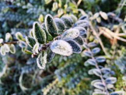 What Cold Weather Means for Colorado Pests - Colorado Pest Pros (1)